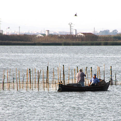 Visit Albufera and Paseo Barca - Cultural events